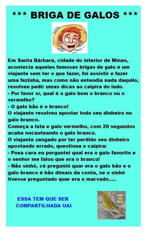 BRIGA DE GALO