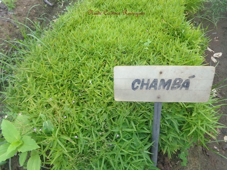 chambá